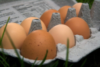 Pastured-eggs-resized-600